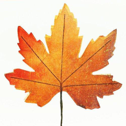 Listy javor jeseň